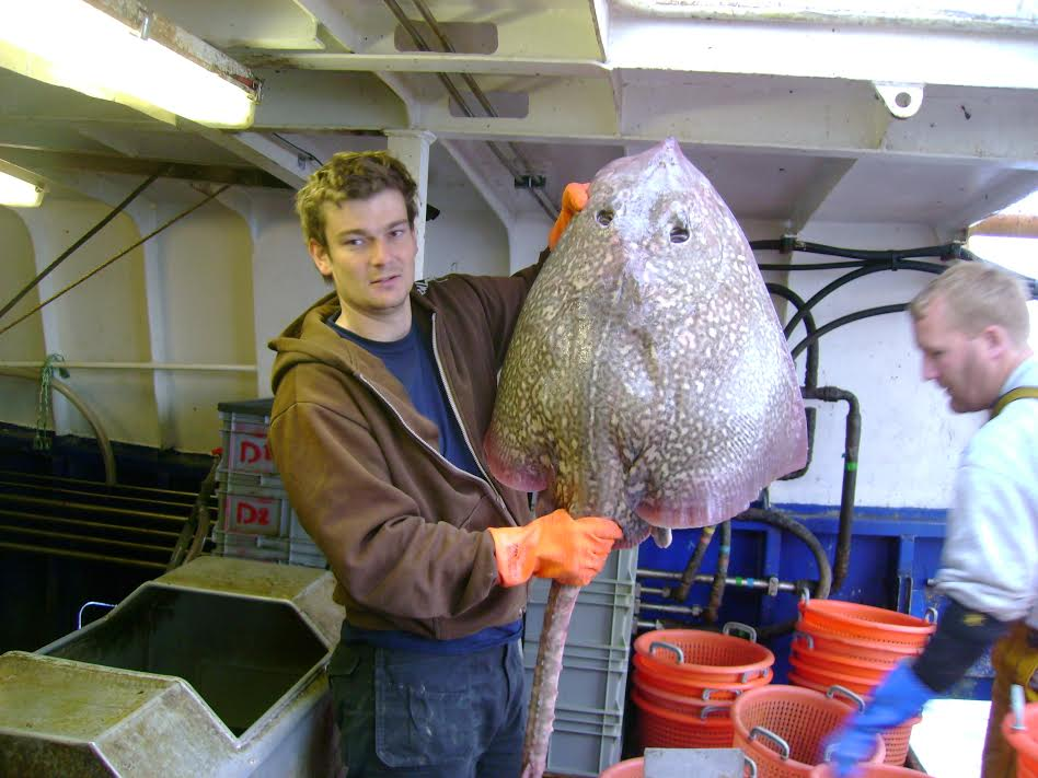 robert enever with largest recorded thornback ray recorded in uk waters